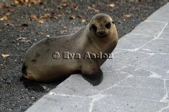 Galapagos Eilanden 2013