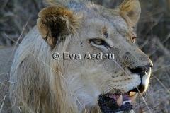 Zuid-Afrika 2012